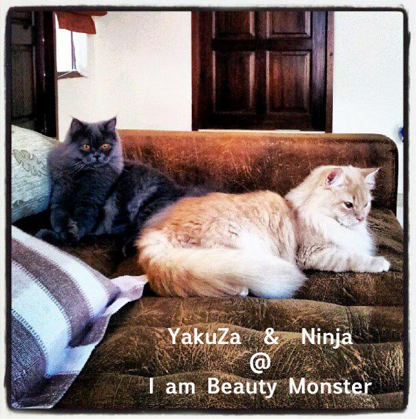 Yakuza and Ninja ~ APPROVED ~